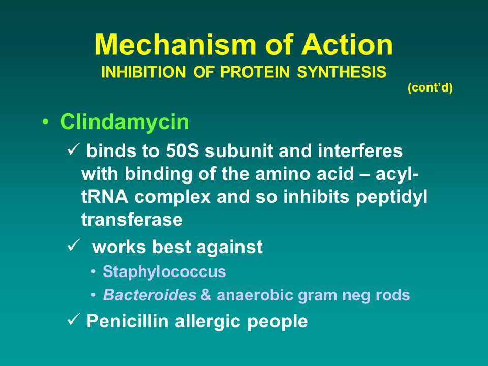 Mechanism of Action INHIBITION OF PROTEIN SYNTHESIS (cont'd) Clindamycin binds to 50S subunit and interferes with binding of the amino acid – acyl- tR