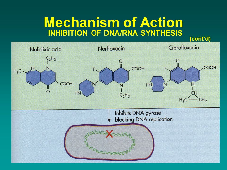 (cont'd) Mechanism of Action INHIBITION OF DNA/RNA SYNTHESIS