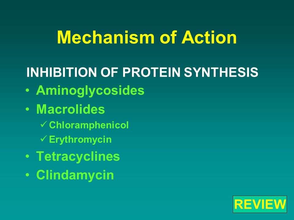 Mechanism of Action Aminoglycosides Macrolides Chloramphenicol Erythromycin Tetracyclines Clindamycin INHIBITION OF PROTEIN SYNTHESIS REVIEW