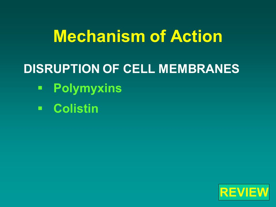 Mechanism of Action DISRUPTION OF CELL MEMBRANES  Polymyxins  Colistin REVIEW