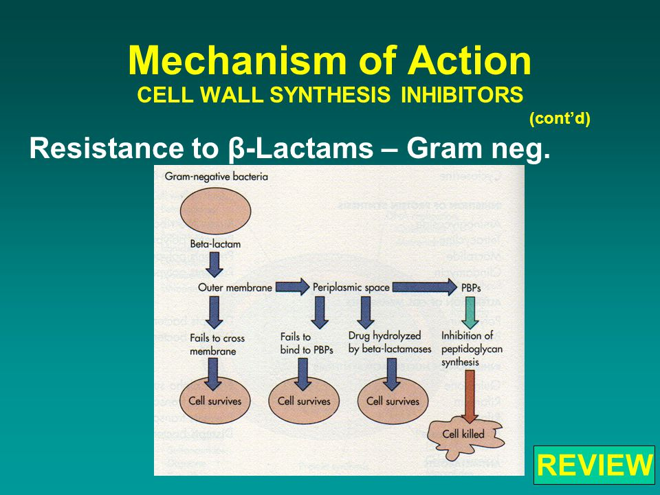 Resistance to β-Lactams – Gram neg. Mechanism of Action CELL WALL SYNTHESIS INHIBITORS (cont'd) REVIEW