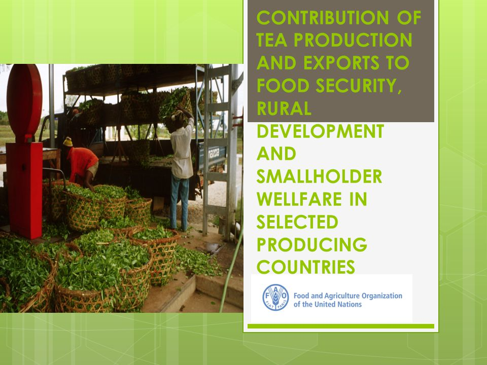 Institutional set up & support for smallholders in India (cont'd)  SGD objective:  Facilitate the collectivization of smallholder tea growers through Primary Producer Societies/ SHGs business entities which produce quality leaf for better price realization  Capacity building  Technical assistance and financial support