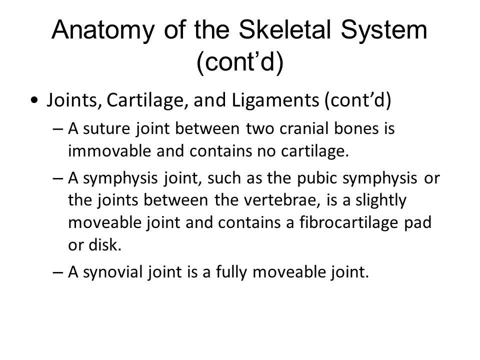 Anatomy of the Skeletal System (cont'd) Joints, Cartilage, and Ligaments (cont'd) – A suture joint between two cranial bones is immovable and contains