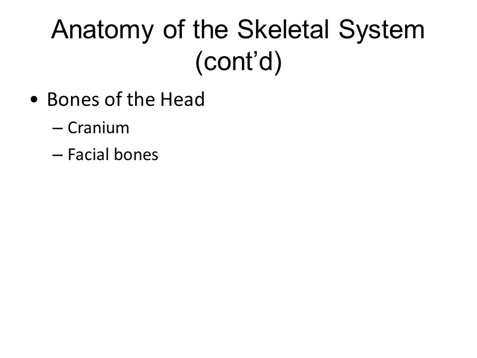 Anatomy of the Skeletal System (cont'd) Bones of the Head – Cranium – Facial bones