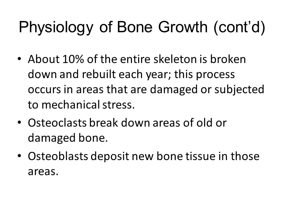 Physiology of Bone Growth (cont'd) About 10% of the entire skeleton is broken down and rebuilt each year; this process occurs in areas that are damage