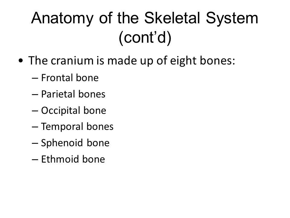 Anatomy of the Skeletal System (cont'd) The cranium is made up of eight bones: – Frontal bone – Parietal bones – Occipital bone – Temporal bones – Sph