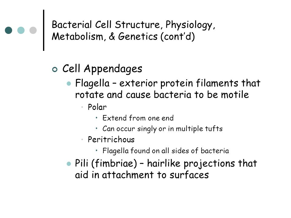 Bacterial Cell Structure, Physiology, Metabolism, & Genetics (cont'd) Cell Appendages Flagella – exterior protein filaments that rotate and cause bact