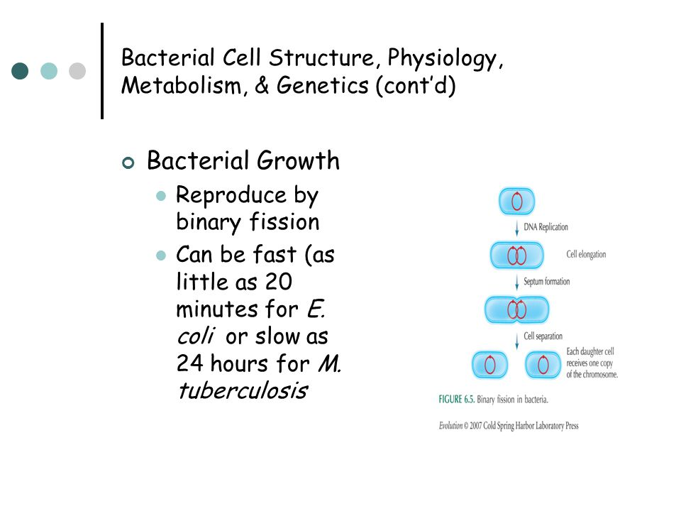 Bacterial Cell Structure, Physiology, Metabolism, & Genetics (cont'd) Bacterial Growth Reproduce by binary fission Can be fast (as little as 20 minutes for E.