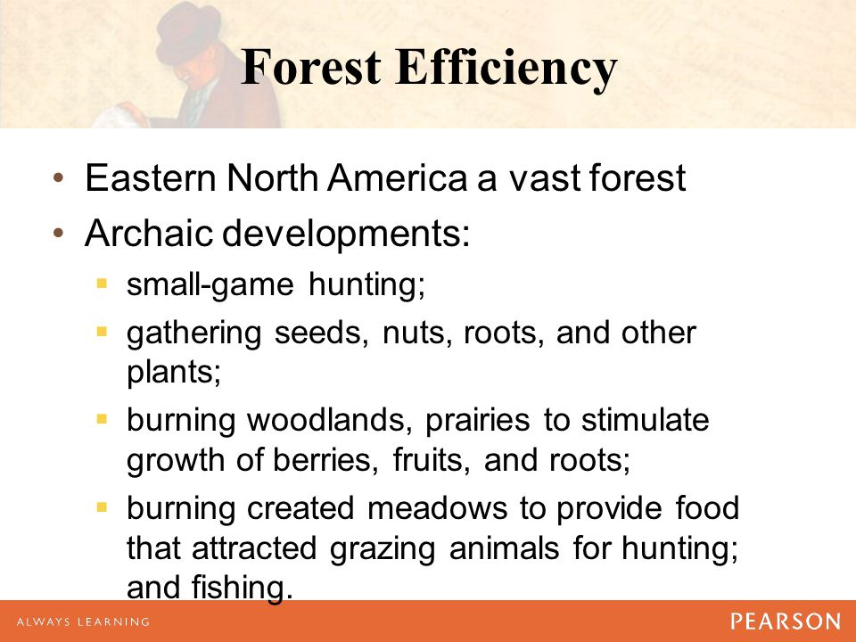 Forest Efficiency Eastern North America a vast forest Archaic developments:  small-game hunting;  gathering seeds, nuts, roots, and other plants; 