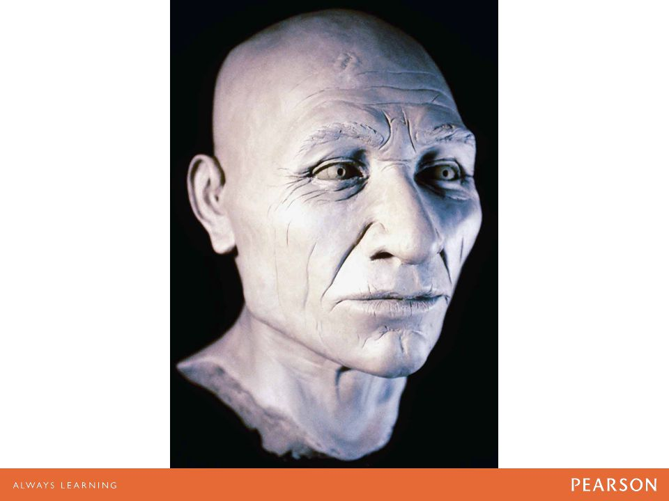 """Bust from the skull of """"Kennewick Man"""""""