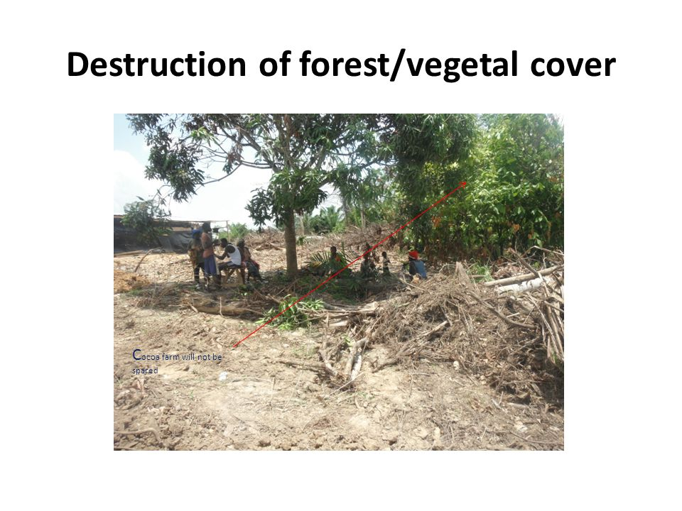 Destruction of forest/vegetal cover C ocoa farm will not be spared