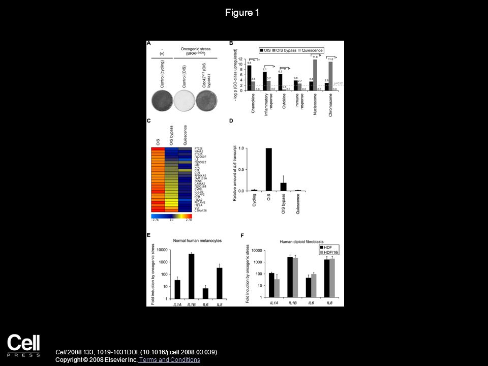 Figure 1 Cell 2008 133, 1019-1031DOI: (10.1016/j.cell.2008.03.039) Copyright © 2008 Elsevier Inc.