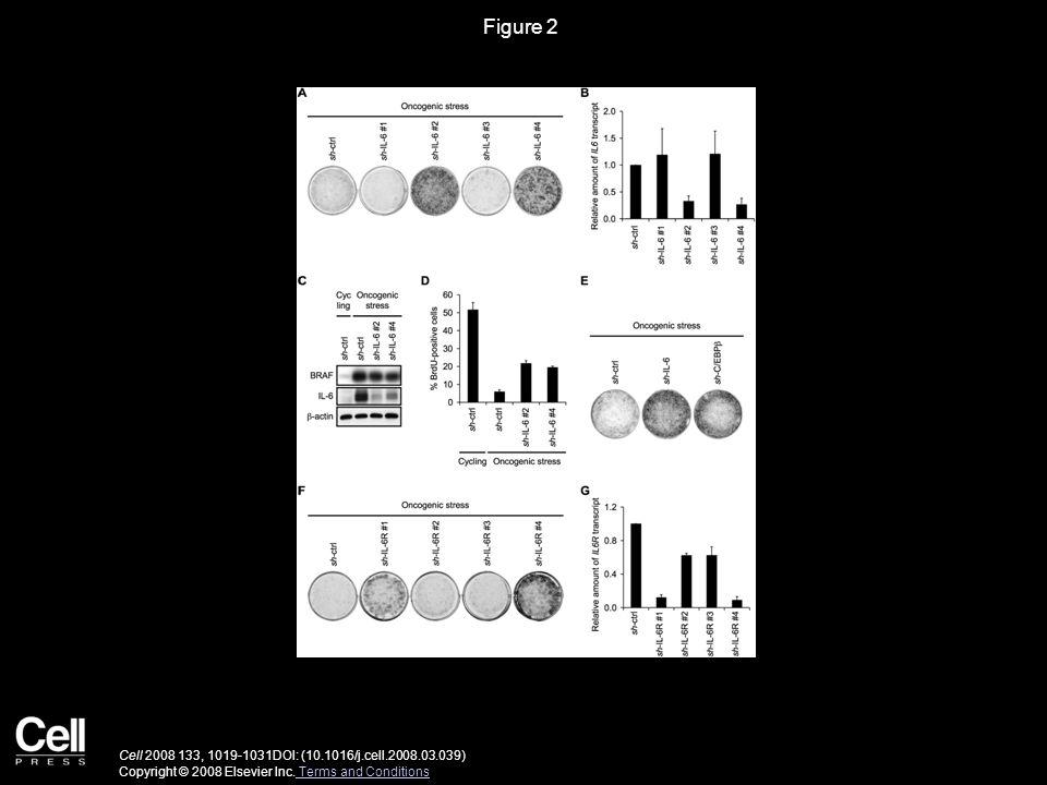 Figure 2 Cell 2008 133, 1019-1031DOI: (10.1016/j.cell.2008.03.039) Copyright © 2008 Elsevier Inc.