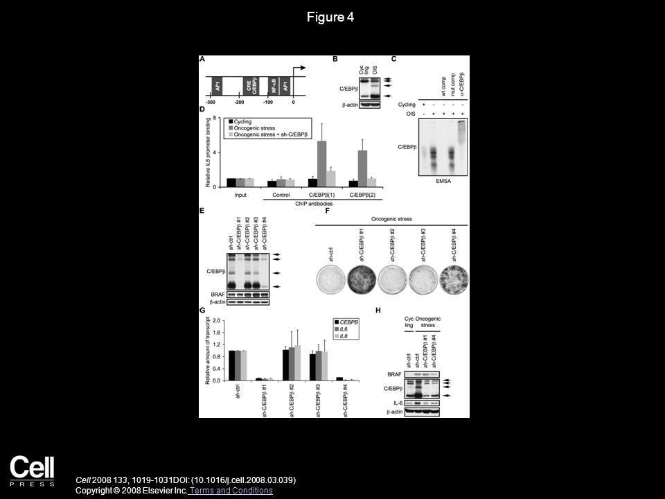 Figure 4 Cell 2008 133, 1019-1031DOI: (10.1016/j.cell.2008.03.039) Copyright © 2008 Elsevier Inc.