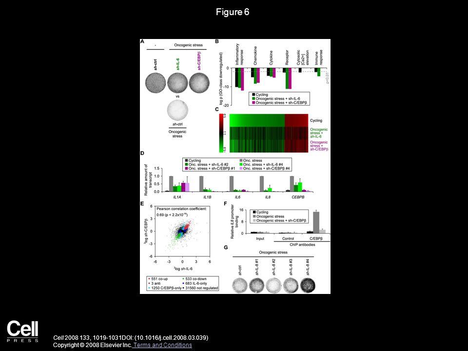Figure 6 Cell 2008 133, 1019-1031DOI: (10.1016/j.cell.2008.03.039) Copyright © 2008 Elsevier Inc.