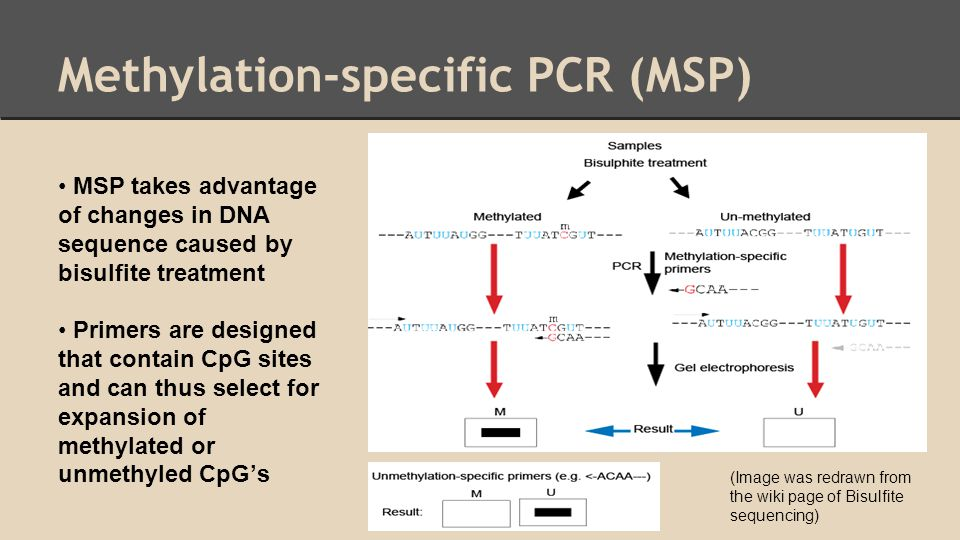 Methylation-specific PCR (MSP) (Image was redrawn from the wiki page of Bisulfite sequencing) MSP takes advantage of changes in DNA sequence caused by bisulfite treatment Primers are designed that contain CpG sites and can thus select for expansion of methylated or unmethyled CpG's
