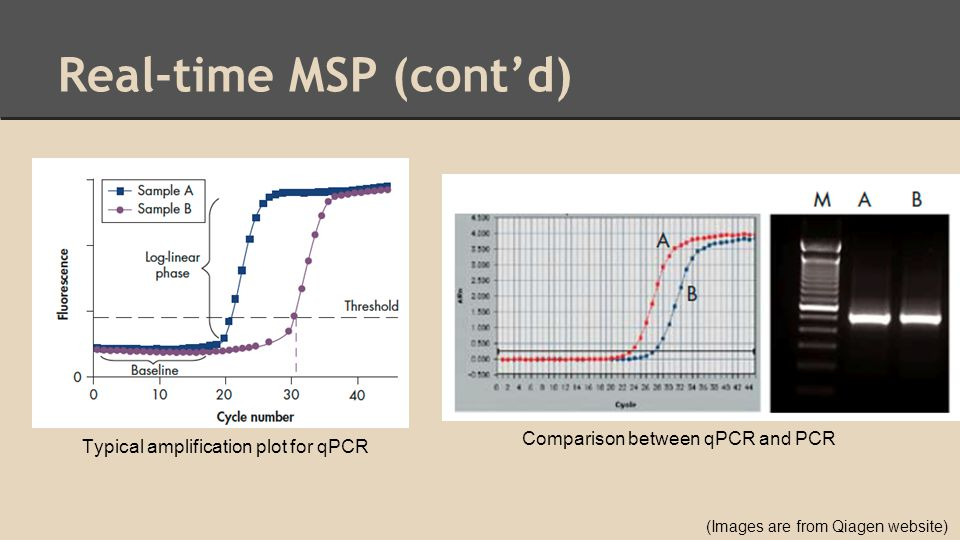 Real-time MSP (cont'd) Typical amplification plot for qPCR Comparison between qPCR and PCR (Images are from Qiagen website)