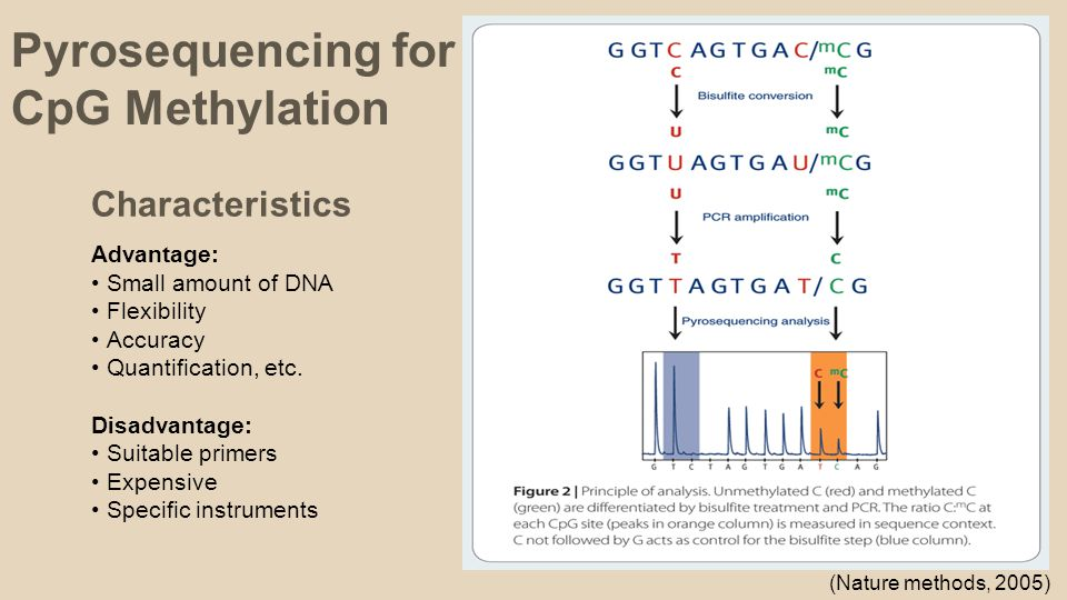 (Nature methods, 2005) Pyrosequencing for CpG Methylation Characteristics Advantage: Small amount of DNA Flexibility Accuracy Quantification, etc.