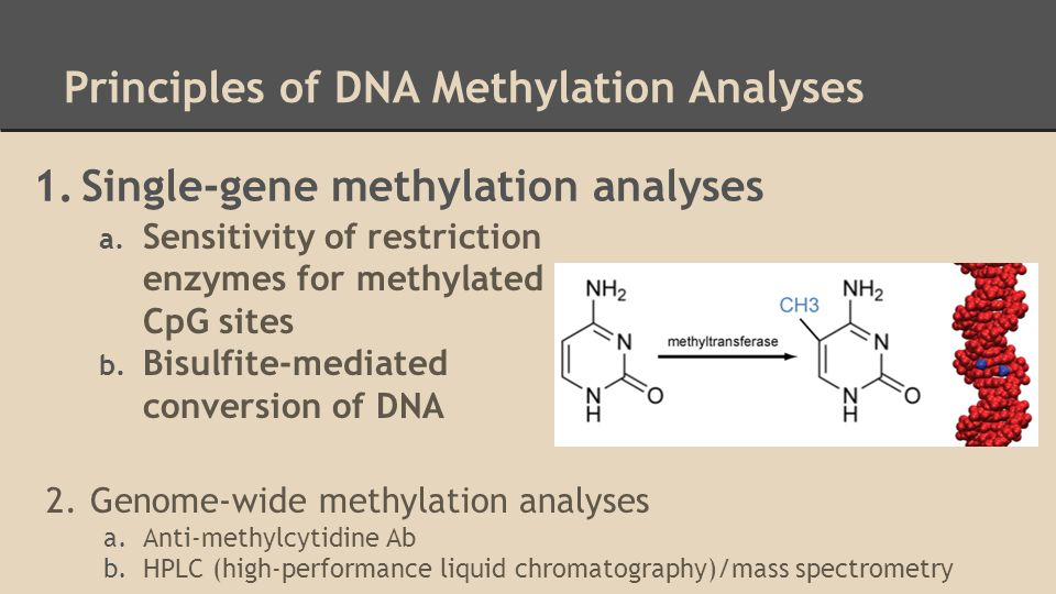 Principles of DNA Methylation Analyses 1.Single-gene methylation analyses 2.Genome-wide methylation analyses a.Anti-methylcytidine Ab b.HPLC (high-performance liquid chromatography)/mass spectrometry a.
