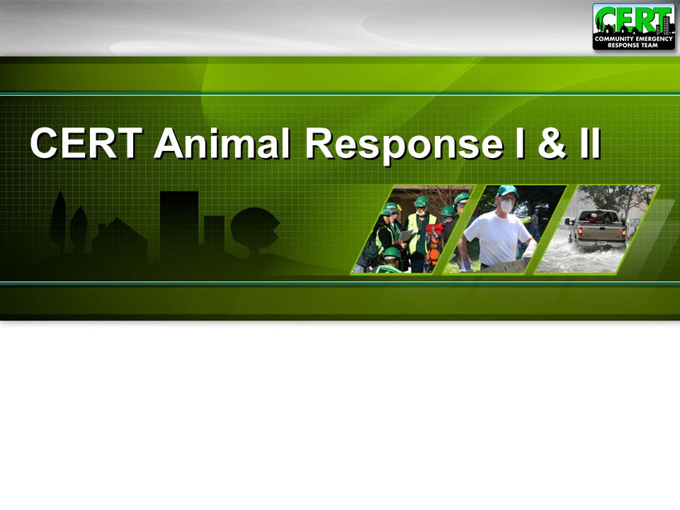 CERT Animal Response II72 Animals can be identified with:  Tags  Microchips  Tattoos  Ear tags  Collars  Bands on birds  Branding on livestock Some communities may have system for identifying dangerous animals Animal Identification
