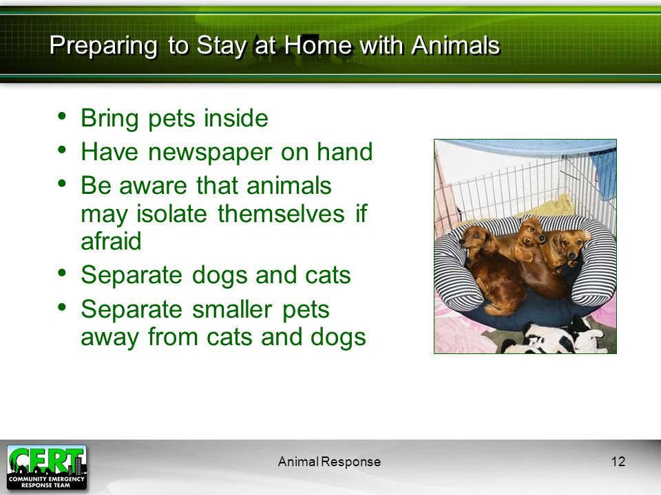 Animal Response12 Bring pets inside Have newspaper on hand Be aware that animals may isolate themselves if afraid Separate dogs and cats Separate smal