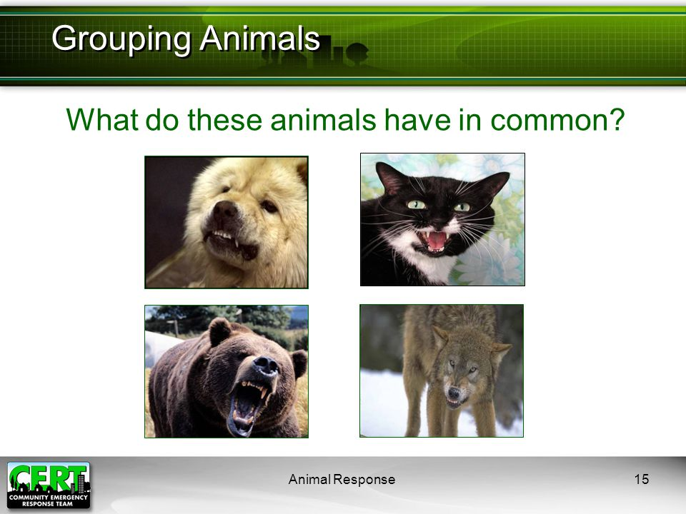 Animal Response15 What do these animals have in common? Grouping Animals