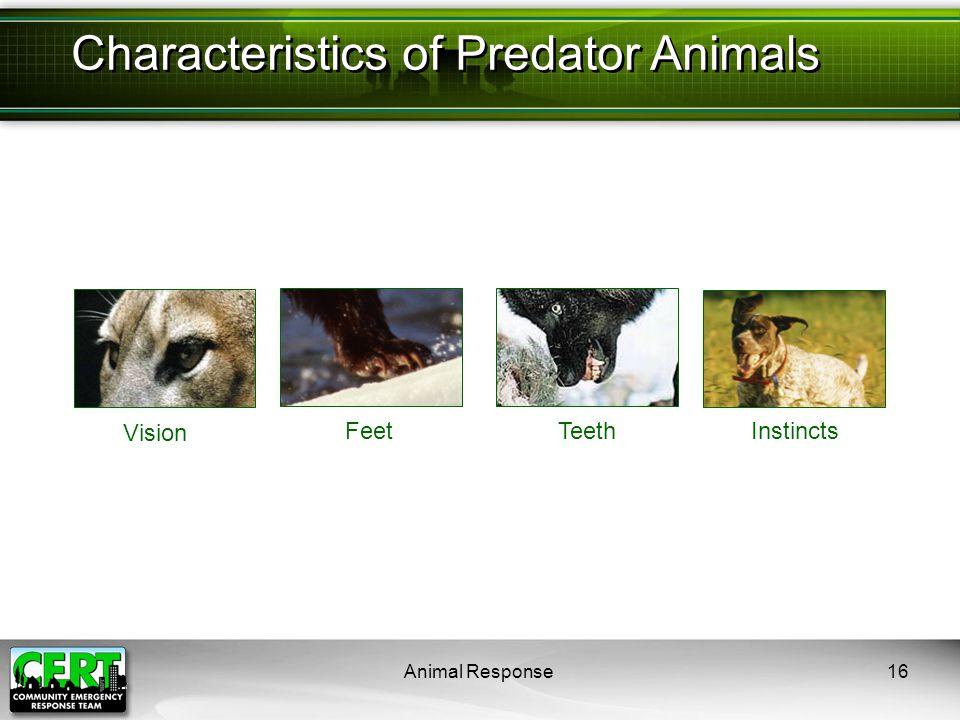 Animal Response16 Characteristics of Predator Animals Vision FeetTeethInstincts