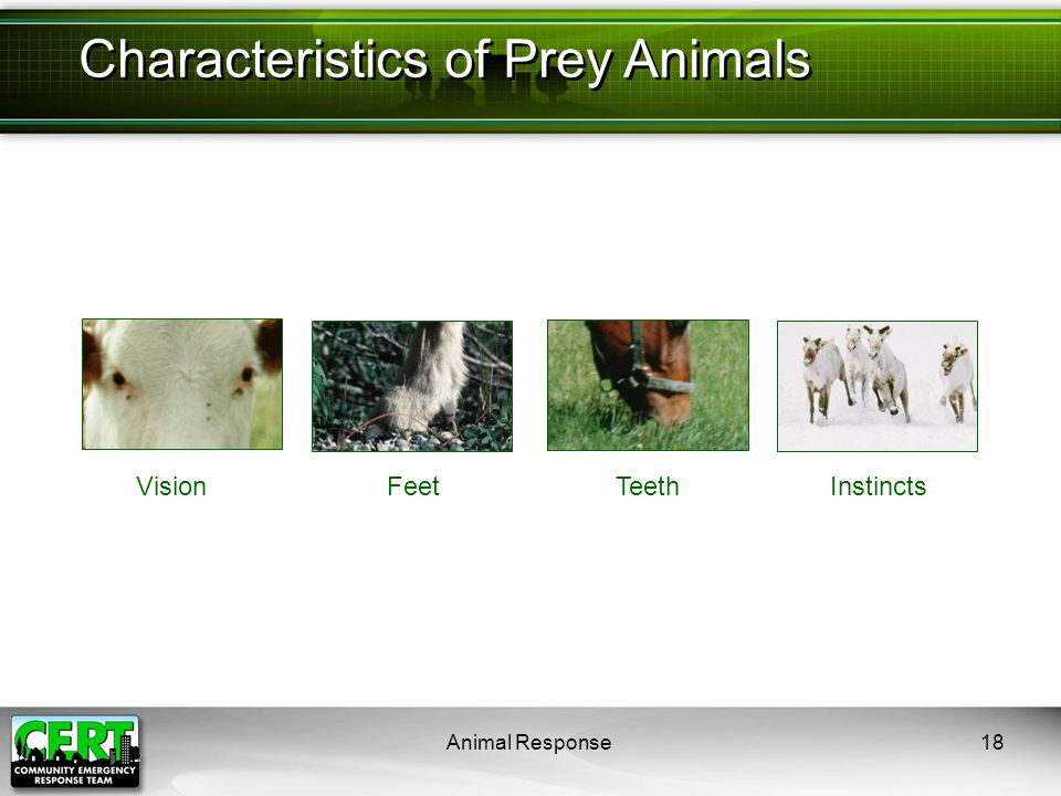 Animal Response18 Characteristics of Prey Animals VisionFeetTeethInstincts