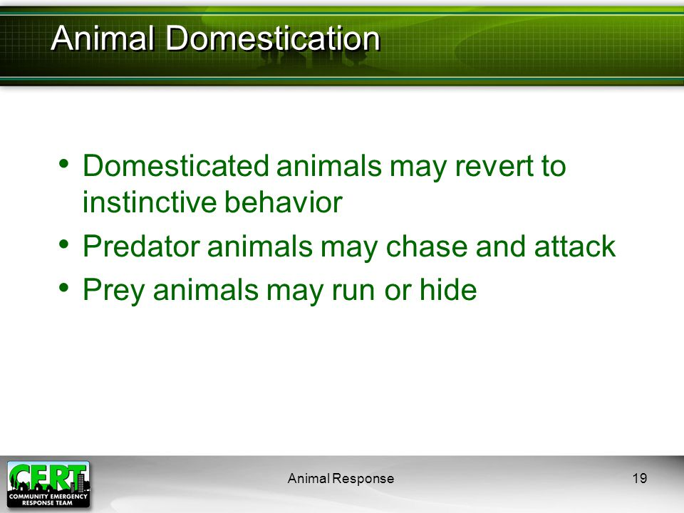 Animal Response19 Domesticated animals may revert to instinctive behavior Predator animals may chase and attack Prey animals may run or hide Animal Do