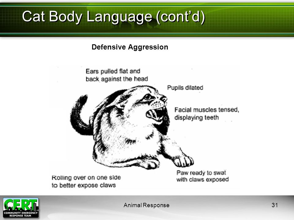 Animal Response31 Cat Body Language (cont'd) Defensive Aggression