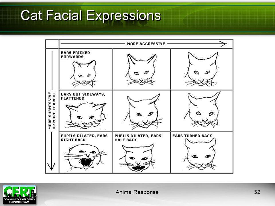 Animal Response32 Cat Facial Expressions