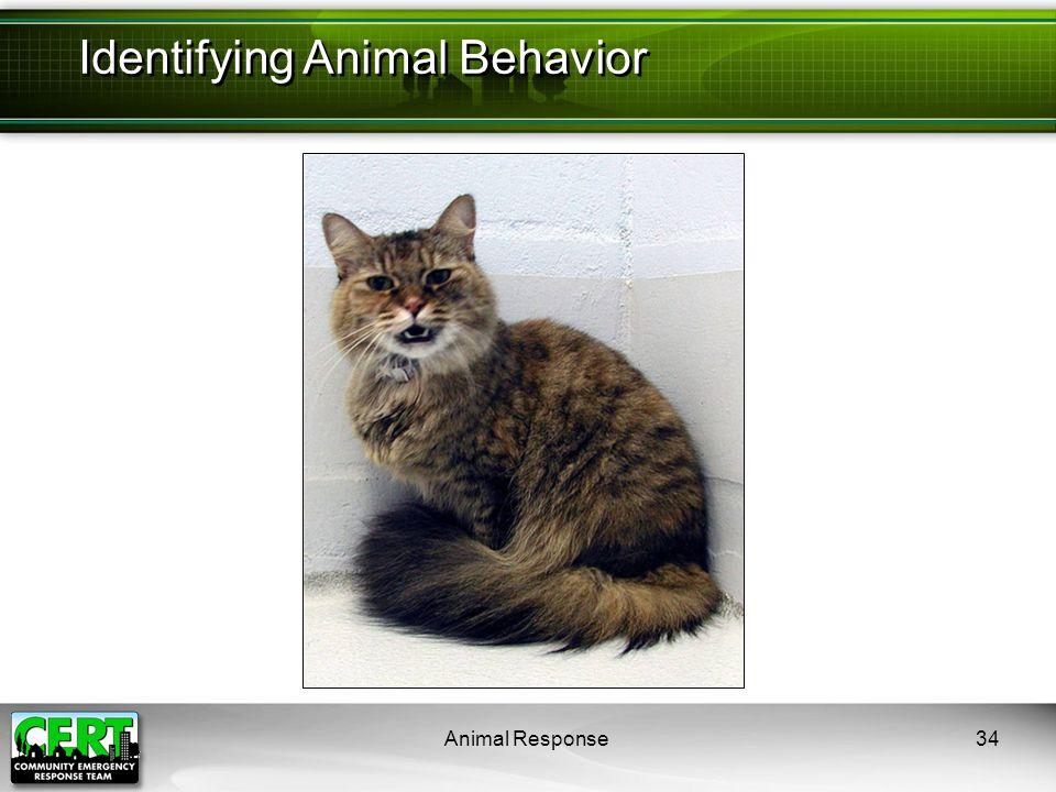 Animal Response34 Identifying Animal Behavior