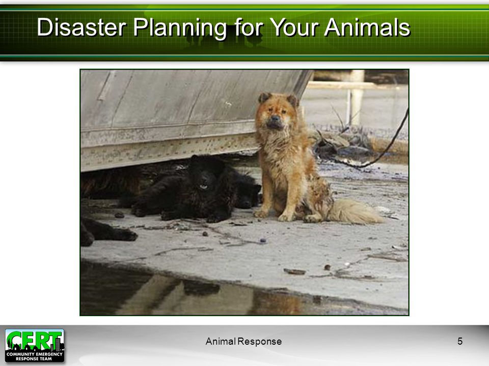 Animal Response6 Animal owners should prepare by:  Identifying potential hazards  Mitigating the impact of hazards  Creating a disaster plan  Assembling disaster supplies  Participating in training and exercises  Knowing your community's disaster response plan Preparing for a Disaster