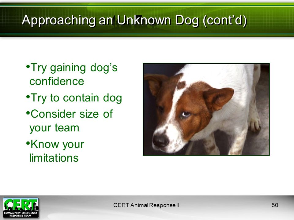 CERT Animal Response II50 Try gaining dog's confidence Try to contain dog Consider size of your team Know your limitations Approaching an Unknown Dog (cont'd)