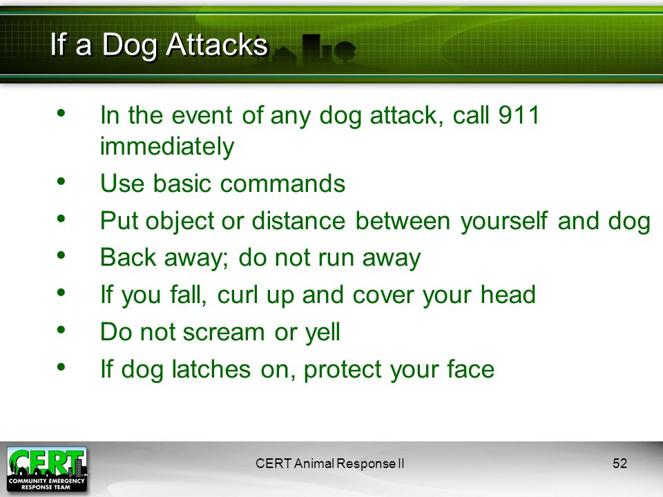 CERT Animal Response II52 In the event of any dog attack, call 911 immediately Use basic commands Put object or distance between yourself and dog Back away; do not run away If you fall, curl up and cover your head Do not scream or yell If dog latches on, protect your face If a Dog Attacks