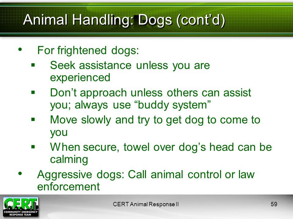 For frightened dogs:  Seek assistance unless you are experienced  Don't approach unless others can assist you; always use buddy system  Move slowly and try to get dog to come to you  When secure, towel over dog's head can be calming Aggressive dogs: Call animal control or law enforcement CERT Animal Response II59 Animal Handling: Dogs (cont'd)
