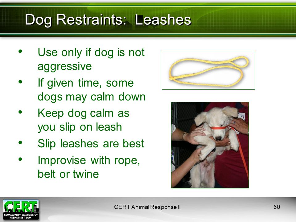 Use only if dog is not aggressive If given time, some dogs may calm down Keep dog calm as you slip on leash Slip leashes are best Improvise with rope,
