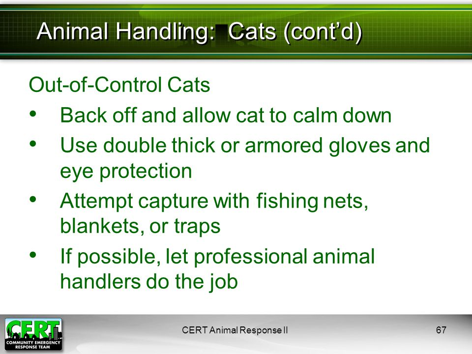 Out-of-Control Cats Back off and allow cat to calm down Use double thick or armored gloves and eye protection Attempt capture with fishing nets, blank