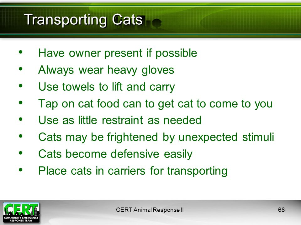 Have owner present if possible Always wear heavy gloves Use towels to lift and carry Tap on cat food can to get cat to come to you Use as little restraint as needed Cats may be frightened by unexpected stimuli Cats become defensive easily Place cats in carriers for transporting CERT Animal Response II68 Transporting Cats