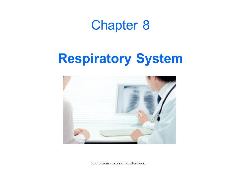 Chapter 8 Respiratory System Photo from sukiyaki/Shutterstock