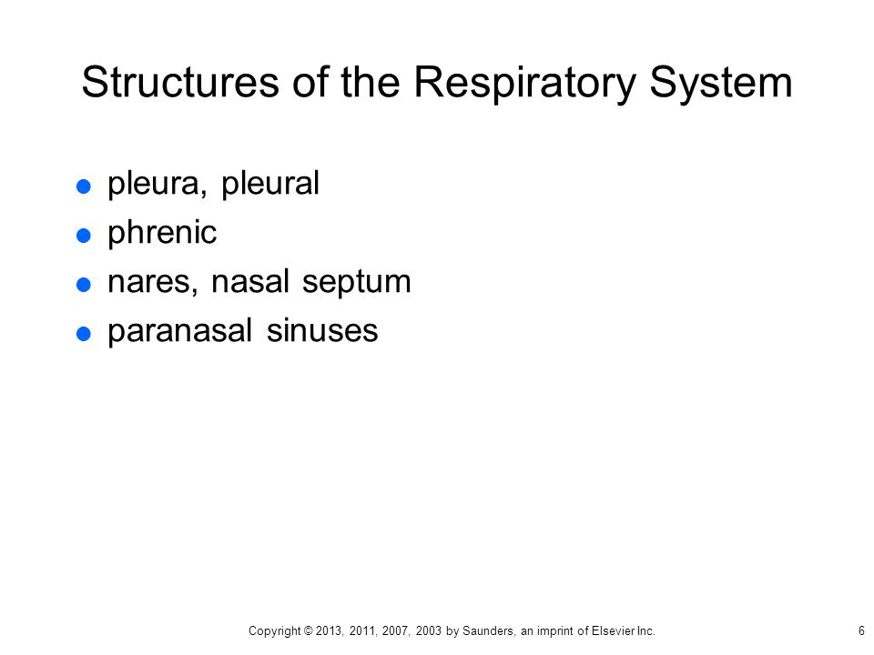 Structures of the Respiratory System  pleura, pleural  phrenic  nares, nasal septum  paranasal sinuses 6 Copyright © 2013, 2011, 2007, 2003 by Saunders, an imprint of Elsevier Inc.