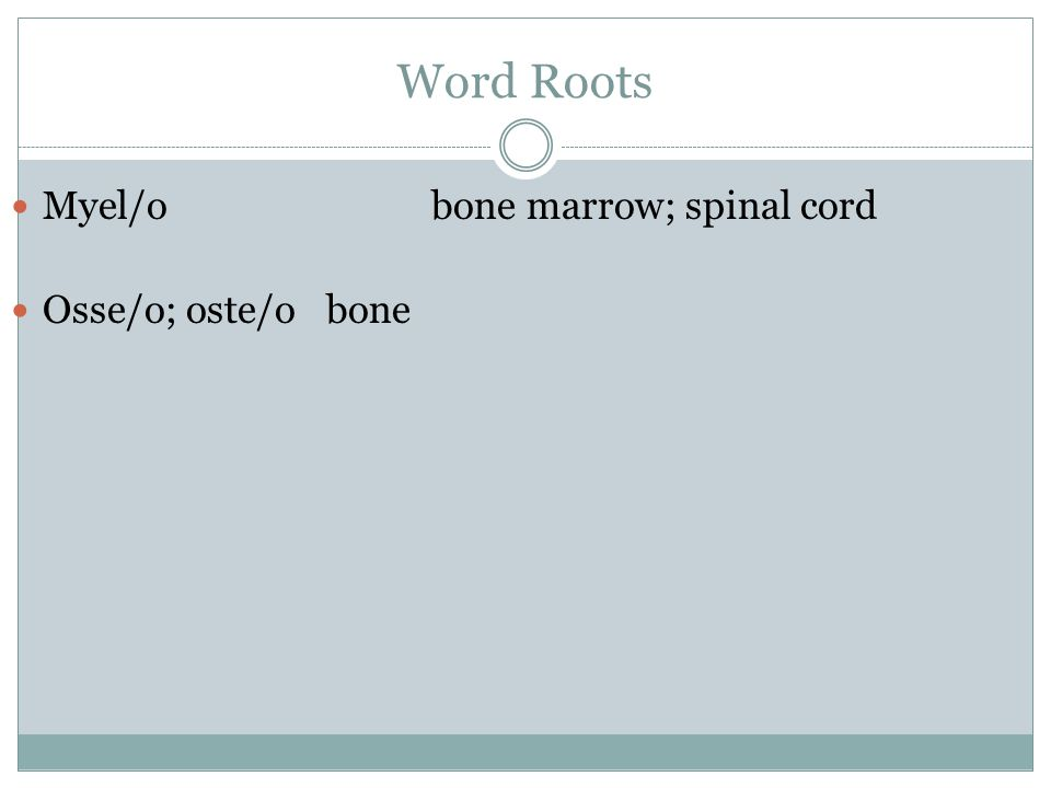 Word Roots Myel/obone marrow; spinal cord Osse/o; oste/obone