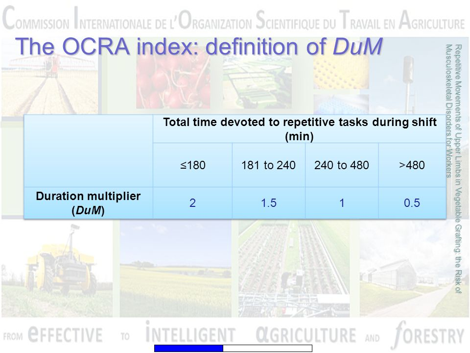 The OCRA index: definition of DuM Repetitive Movements of Upper Limbs in Vegetable Grafting: the Risk of Musculoskeletal Disorders for Workers