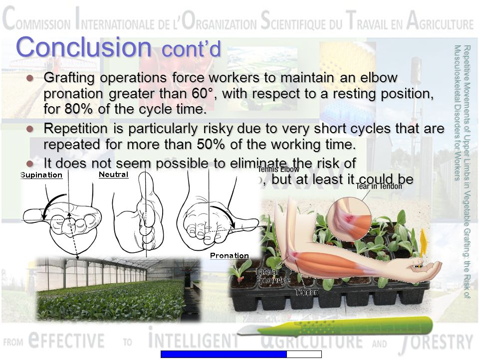 Grafting operations force workers to maintain an elbow pronation greater than 60°, with respect to a resting position, for 80% of the cycle time. Graf