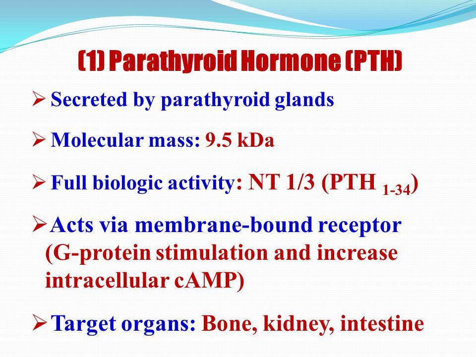 Regulation of Blood Level of Calcium  Parathyroid hormone (PTH)  Calcitriol: Active form of vitamin D  ? Calcitonin