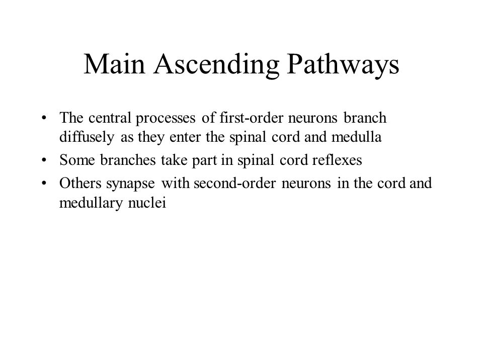 Main Ascending Pathways The central processes of first-order neurons branch diffusely as they enter the spinal cord and medulla Some branches take par
