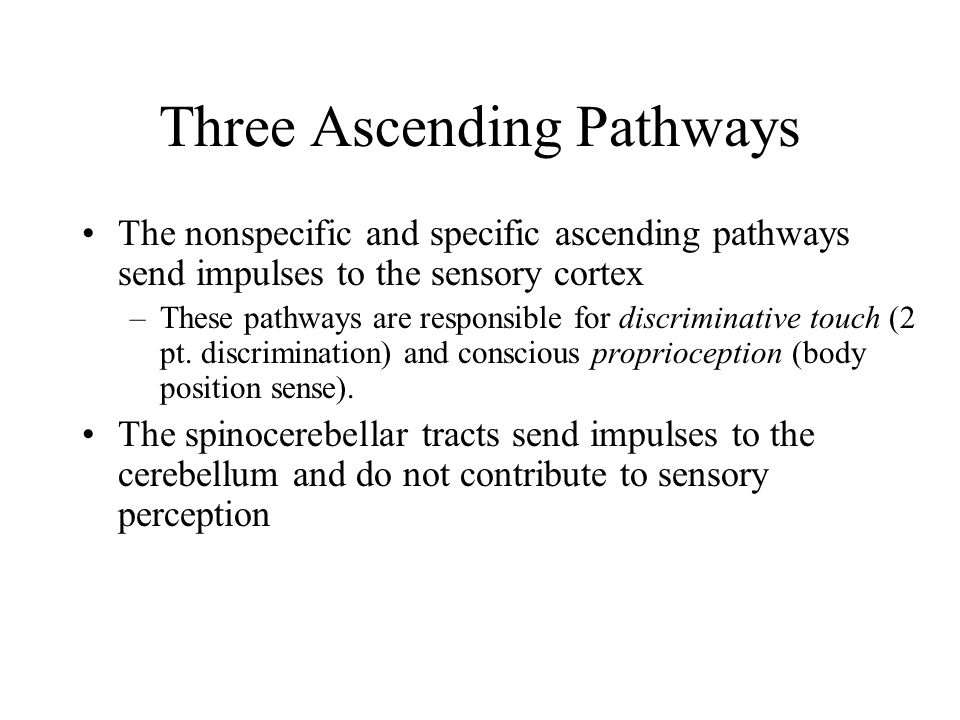 Three Ascending Pathways The nonspecific and specific ascending pathways send impulses to the sensory cortex –These pathways are responsible for discriminative touch (2 pt.