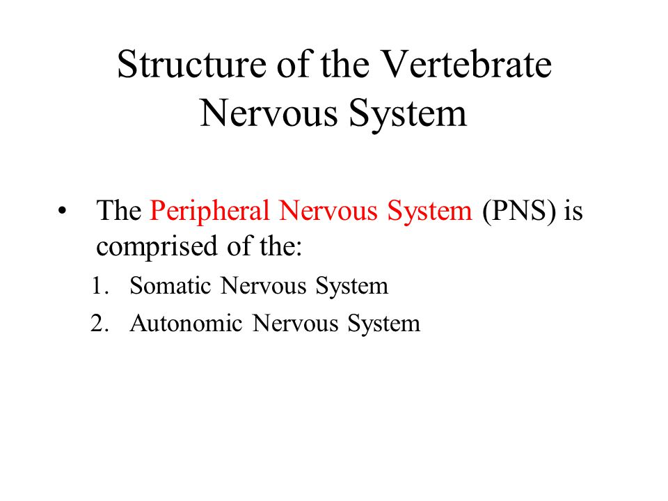 Structure of the Vertebrate Nervous System The Peripheral Nervous System (PNS) is comprised of the: 1.Somatic Nervous System 2.Autonomic Nervous Syste