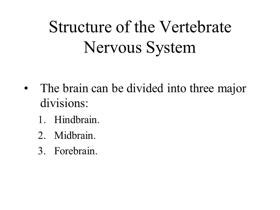 Structure of the Vertebrate Nervous System The brain can be divided into three major divisions: 1.Hindbrain. 2.Midbrain. 3.Forebrain.