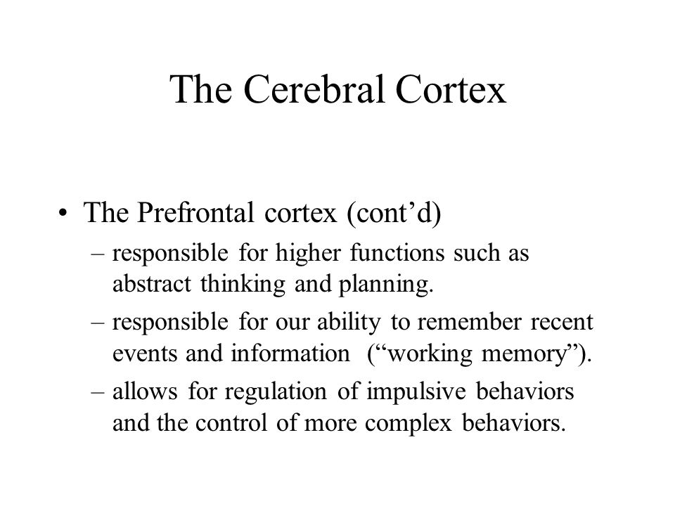 The Cerebral Cortex The Prefrontal cortex (cont'd) –responsible for higher functions such as abstract thinking and planning. –responsible for our abil